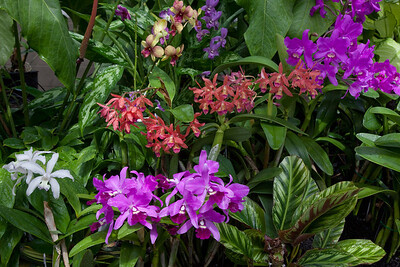Tropical Display 1304