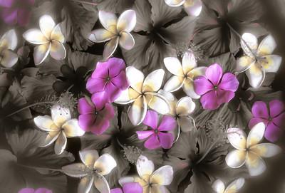 Bali Blooms BO4C5cs