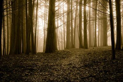 Sepia Fog Forest 6721bws