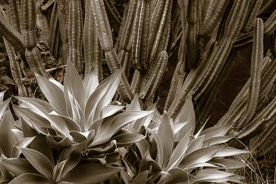 Agave & Cacti 3261CS