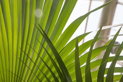 Palm Fans 8664