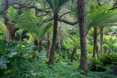 GG Park Jungle 0241