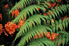 Tree Fern & Clivia BO4F