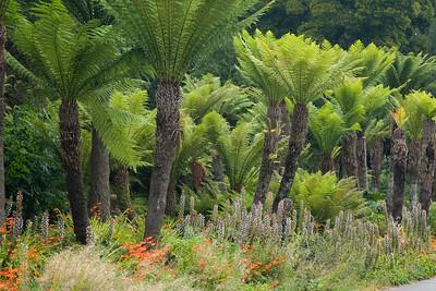 Botanical Landscape  2068