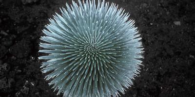 Planet Silversword 57 BO11A
