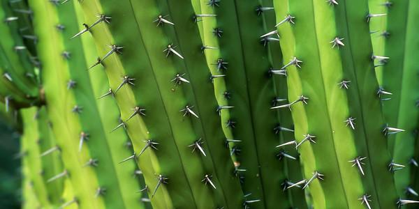 Cacti Closeup BO11I2