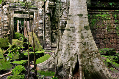 Preah Khan Trunk 3983