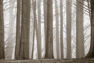 Forest Sentinels 5415bws