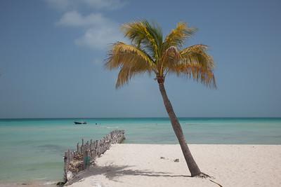 Isla Palm 6240
