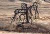 Archaic Tree 2002