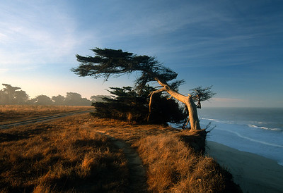 Morning on the Cliff 0038
