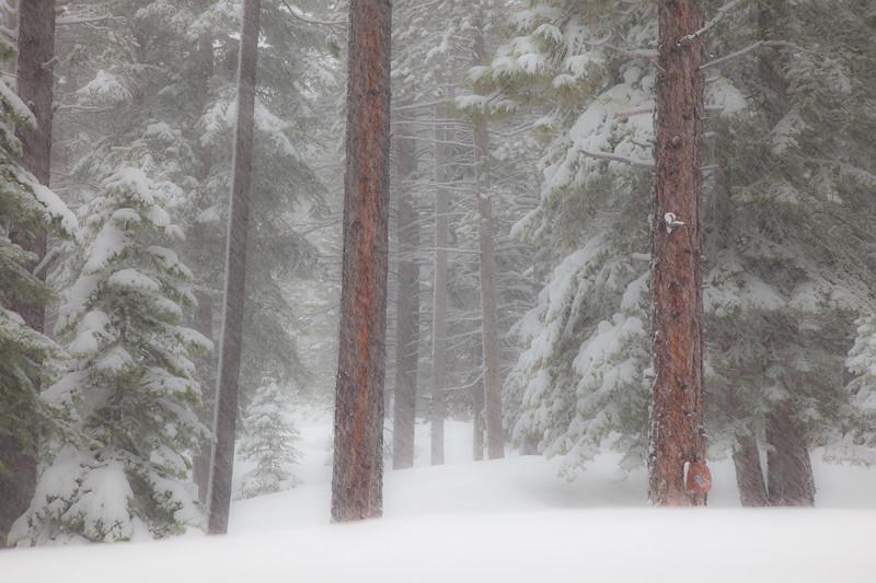 Tahoe Donner Snowstorm 5737cs
