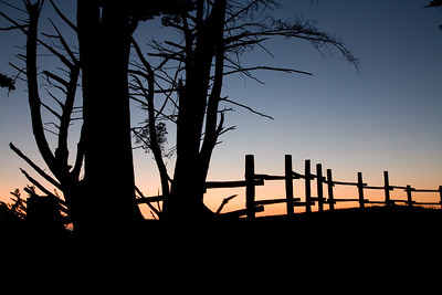 Tree Fence Silhouette 6570
