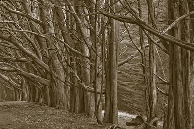 Doelger Cypress Layers 6219bw