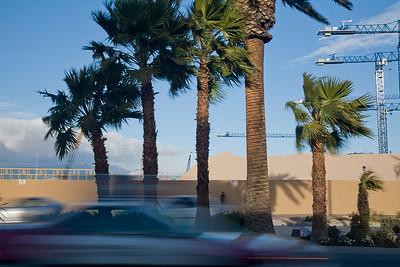 Palms & Cranes 9641