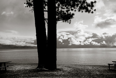 Split Pine & Storm Clouds 6125bw