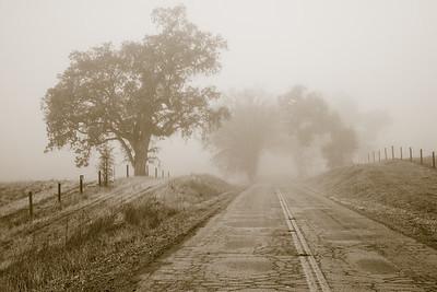 Santa Margarita Oaks in Fog 8565bws