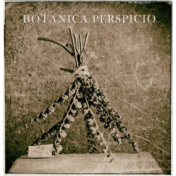 Botanical Perspicio Cover (Veronica)