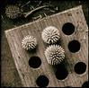 Echinops Ritro 4