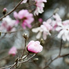 Early blooms