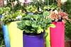 Botanical Center   Des Moines, IA<br /> <br /> Decorative lettuce