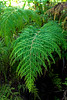 Garden of Eden Botanical Garden: Fern