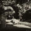 Japanese garden at the Miami Beach Botanical Gardens