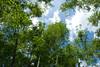 Morikami Museum and Japanese Gardens; Bamboo Grove