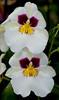 Parkside Orchids