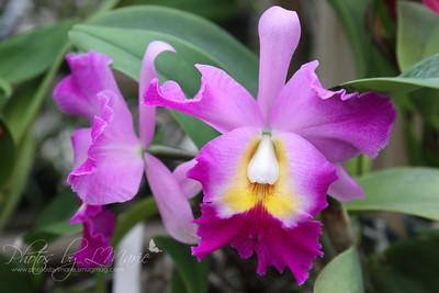 South Texas Botanical Garden & Nature Center