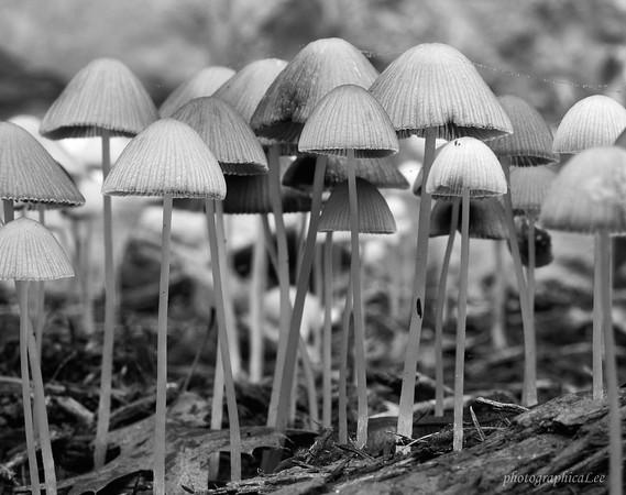 Mushroom Brigade
