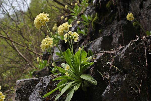 Caucasus, Georgia spring 2011