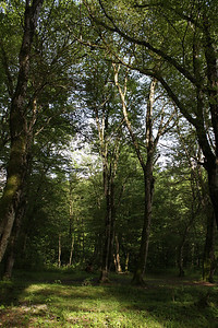 Deciduous woodland at Lagodechi