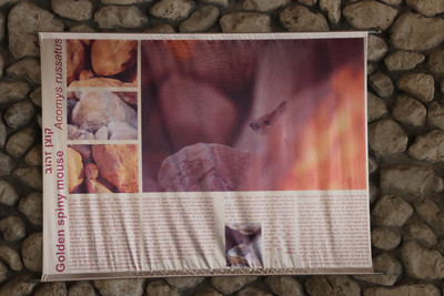 Information flag at the entrance of Ein Gedi National Park