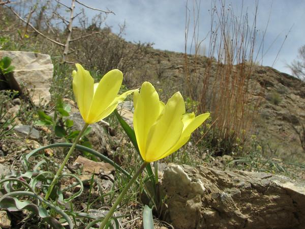 Eastern Elburz Mountains (NE Iran), spring 2009