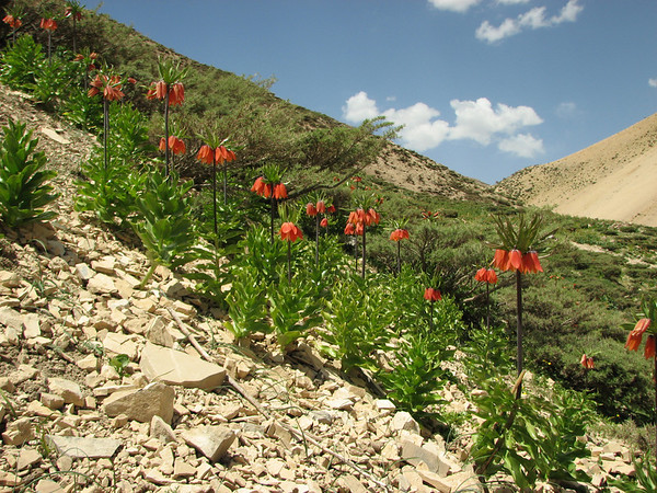 Iran, Zagros Mountains Spring 2008