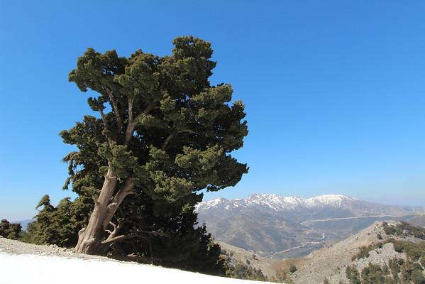 Crete, March 2012