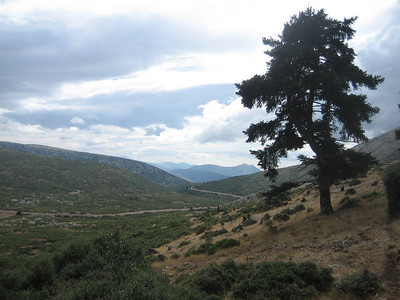 (lower slopes of Mount Elikonas, Atttica)