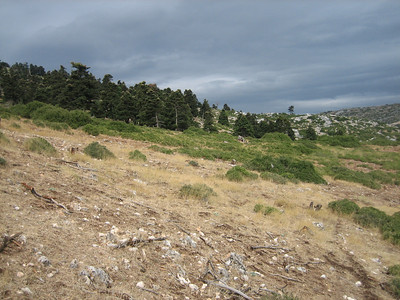 (lower slopes of Mount Elikonas, Atttica)