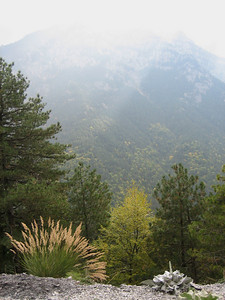 Holcus lanatus (Between Litochoro and Prionia at the foot of Mount Olympus)