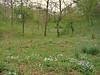 Habitat of Anemone apennina (Gargano)
