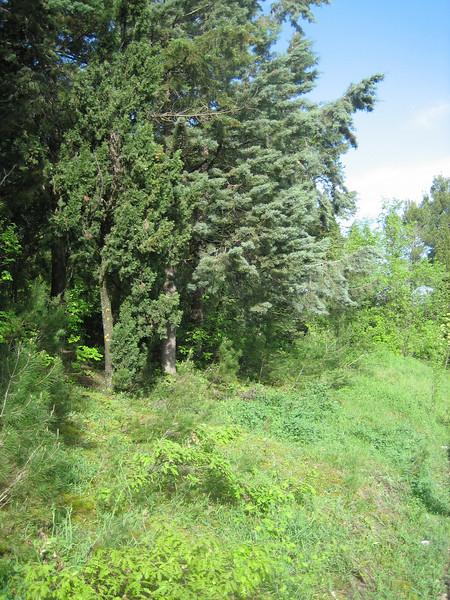Habitat of Orchis morio
