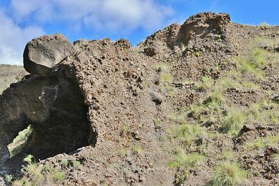 Habitat of Aeonium nobile - endemic to La Palma -  and Aeonium sedifolium (along the LP-1, climbing to Mirador El Time, Barranco de las Angustias)