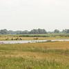 Konikspaarden (Noordwaard, just southwest of Werkendam)