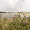 Cirsium vulgare (Noordwaard, just southwest of Werkendam)