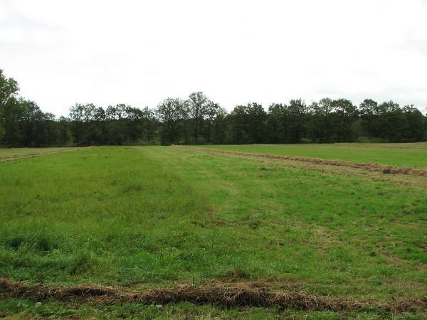 Plateaux, Noord-Brabant, S Netherlands, September 2009