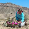 Opuntia basilaris var. basilaris