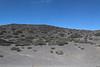 Habitat of Maihuenia? (just north of the Neuquen - Mendoza border)
