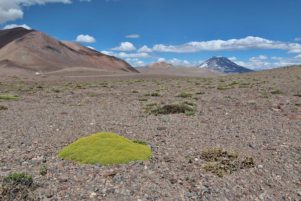 Mendoza: Laguna del Diamante and further north, Argentina, January 2012