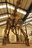 Dinosaur Museum at Plaza Huincal